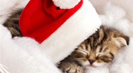 Christmas Cats Image