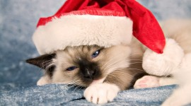 Christmas Cats Photo