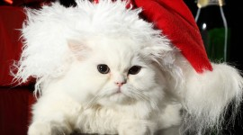 Christmas Cats Photo #3