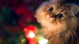 Christmas Cats Wallpaper 1080p