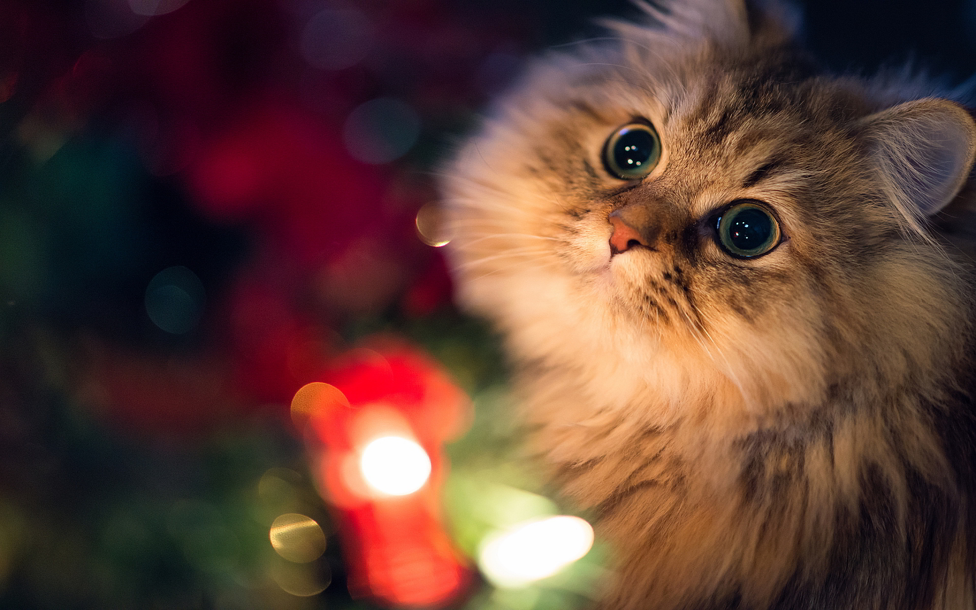 Christmas Sats Wallpapers High Quality Download Free