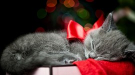 Christmas Cats Wallpaper For Desktop