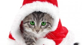 Christmas Cats Wallpaper For PC