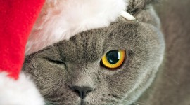 Christmas Cats Wallpaper For The Smartphone