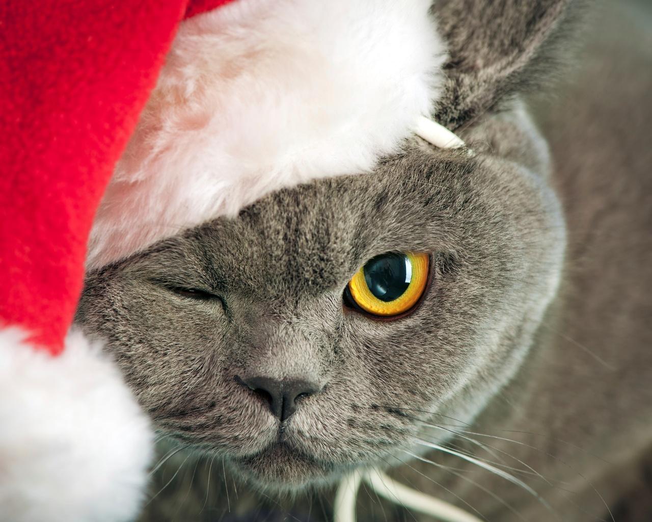 Christmas Cat Wallpaper Iphone