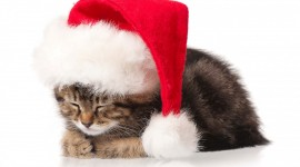 hristmas Cats Wallpaper Full HD