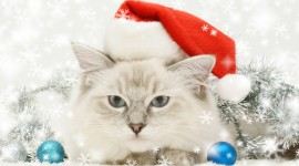 Christmas Cats Wallpaper For IPhone