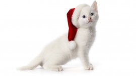 Christmas Cats Wallpaper High Definition