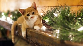 Christmas Cats Wallpaper High Resolution
