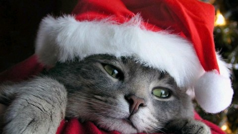 Christmas Cats wallpapers high quality