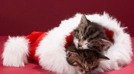Christmas Cats Wallpaper Ultra HD
