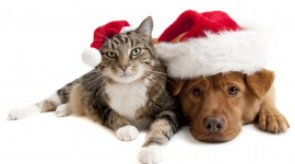 Christmas Cats Wallpaper Widescreen