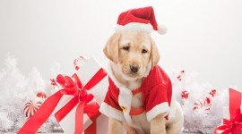 Christmas Dogs 4K Wallpaper Free