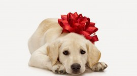 Christmas Dogs Best Wallpaper