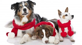 Christmas Dogs Desktop Wallpaper