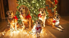 Christmas Dogs Desktop Wallpaper Free