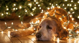Christmas Dogs Desktop Wallpaper HD