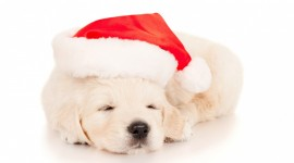 Christmas Dogs Photo #2