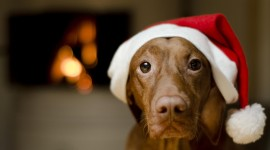 Christmas Dogs Wallpaper 1080p