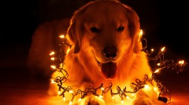 Christmas Dogs Wallpaper