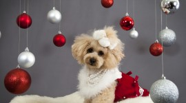 Christmas Dogs Wallpaper Download