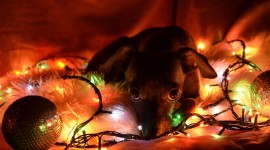 Christmas Dogs Wallpaper For IPhone
