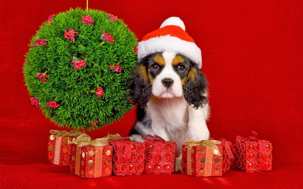Christmas Dogs wallpapers HD