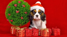 Christmas Dogs Wallpaper For PC