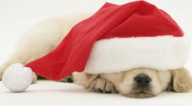 Christmas Dogs Wallpaper Full HD