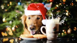 Christmas Dogs Wallpaper Gallery