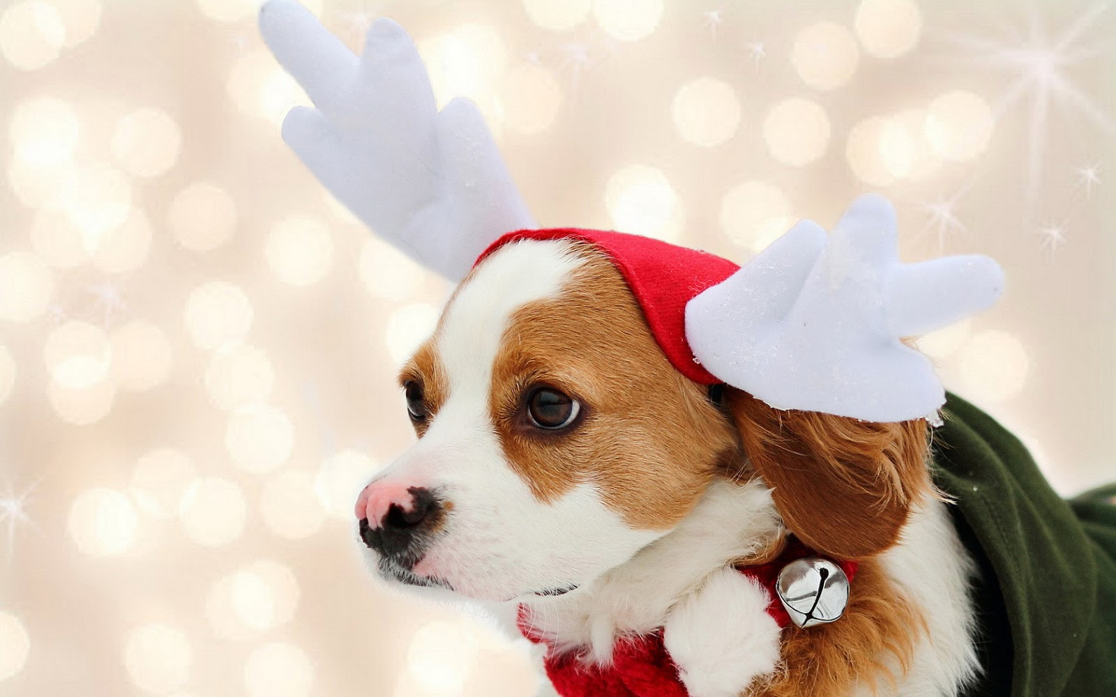 Christmas Dogs Wallpapers High Quality