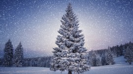 Christmas Tree Wallpaper Gallery