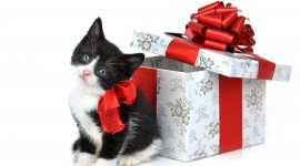 Christmas Cats Wallpaper Download