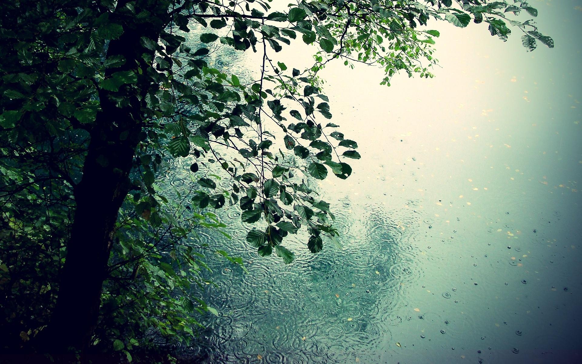 Rain Wallpapers High Quality