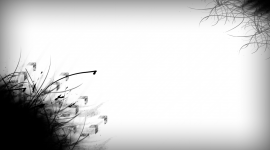 White Image #3