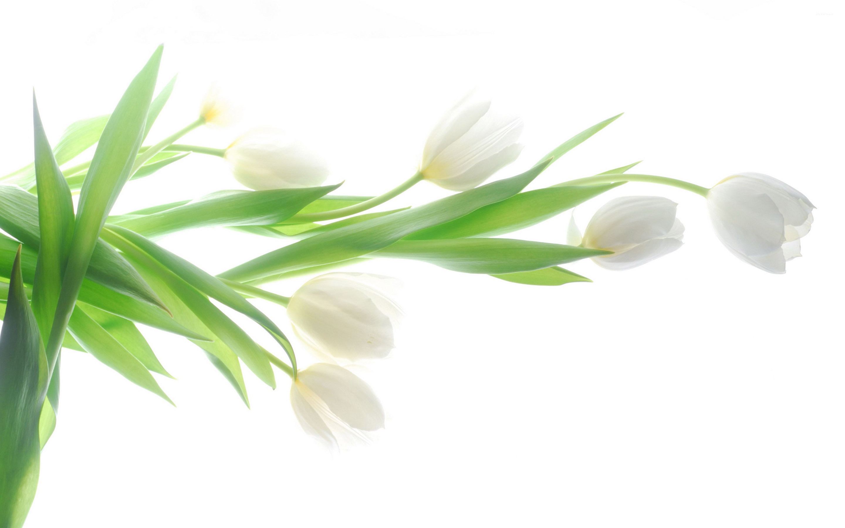 White wallpapers high quality download free dhlflorist Image collections