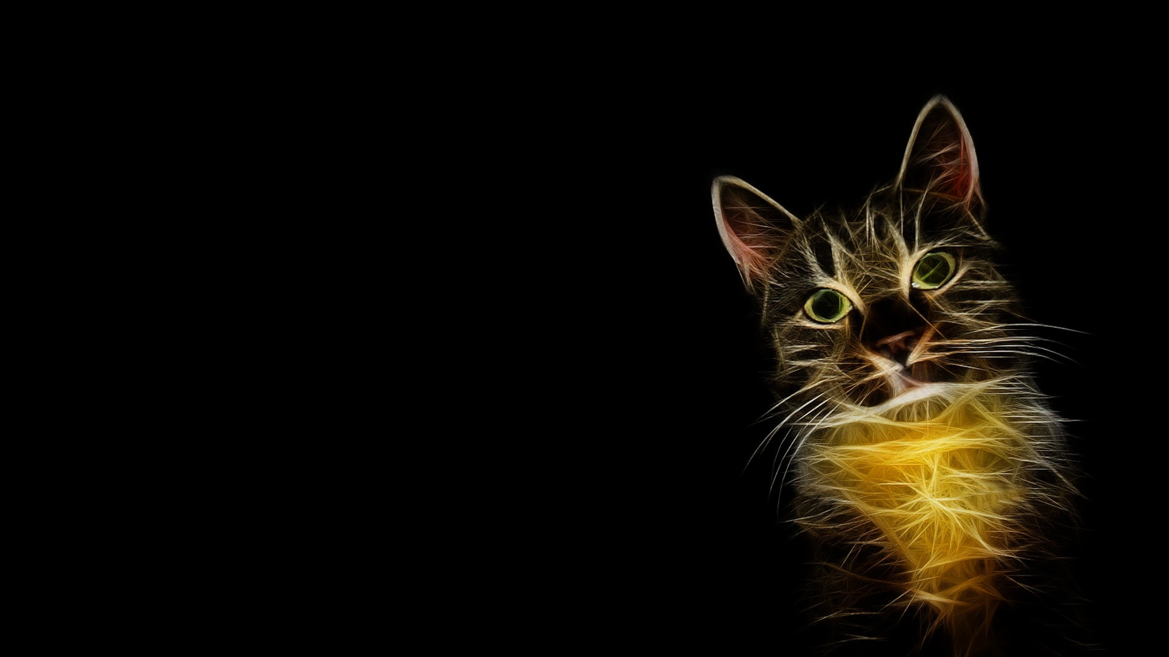 4k cat wallpapers high quality download free
