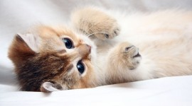 4K Cat Photo #2