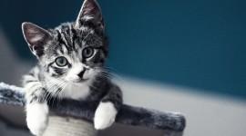 4K Cat Photo