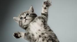 4K Cat UHD