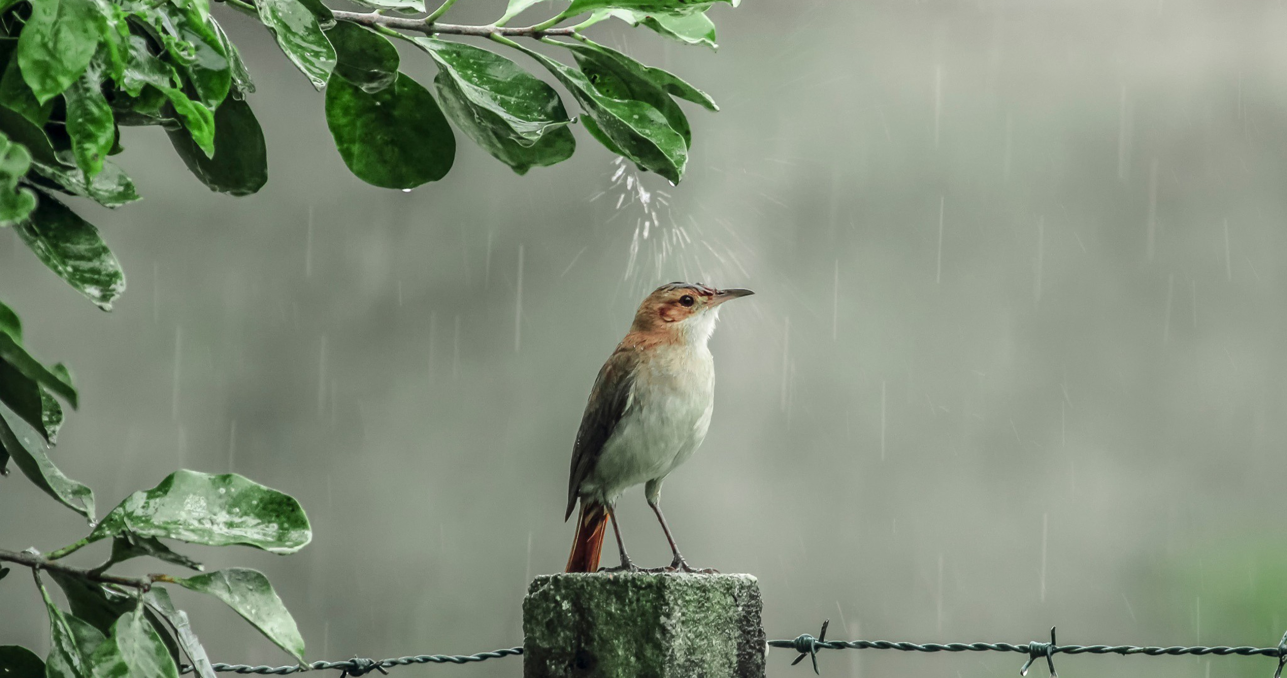 4k rain wallpapers high quality download free 4k rain wallpapers voltagebd Images