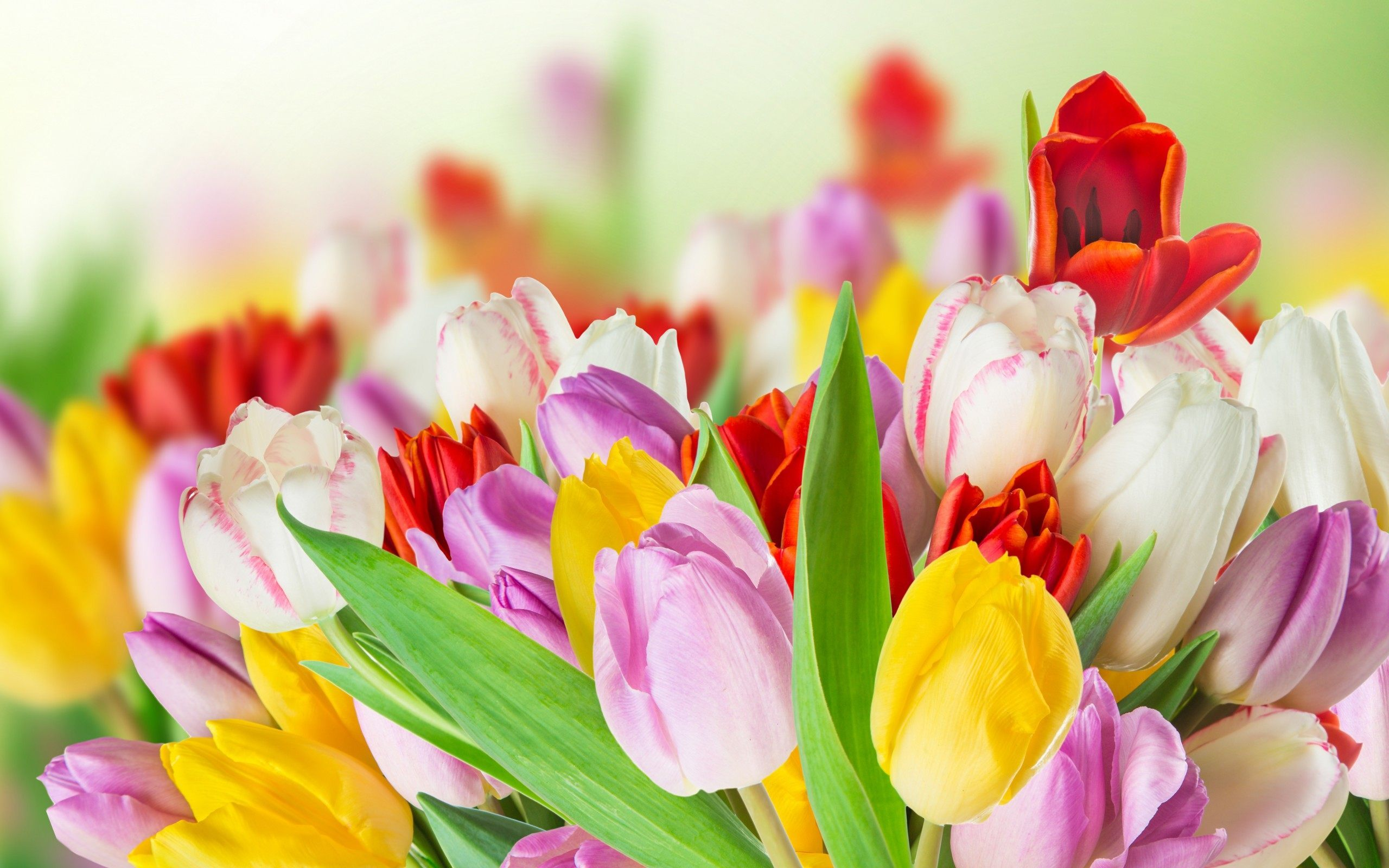 4k Spring Wallpapers High Quality Download Free
