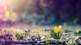 4K Spring Image