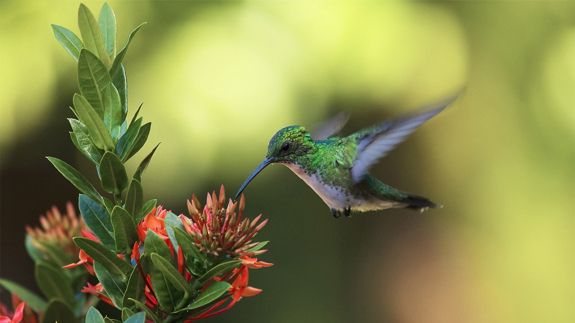 Free Download Wallpaper: Colibri Wallpapers High Quality