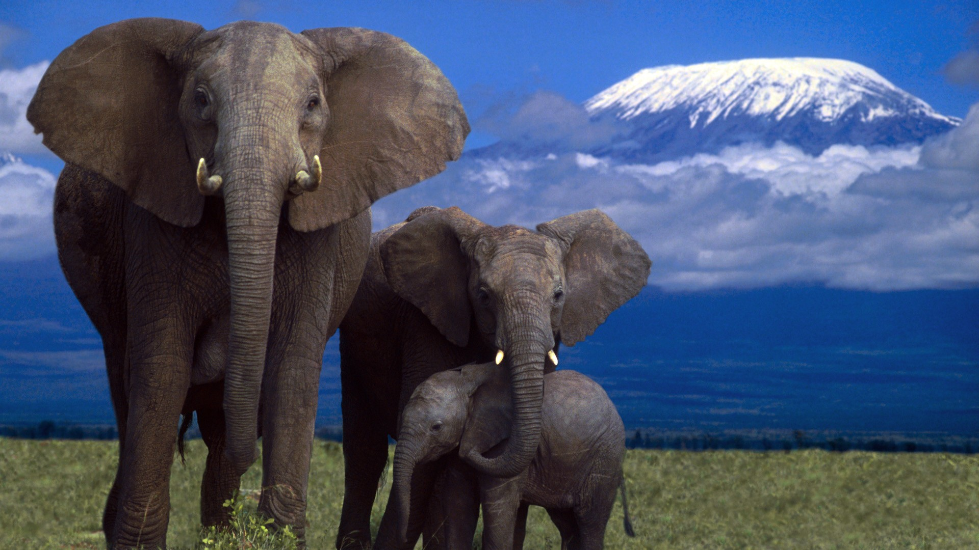 Elephants Wallpapers High Quality