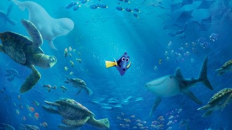 Finding Dory wallpapers high quality