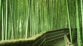 Bamboo High Quality Wallpaper