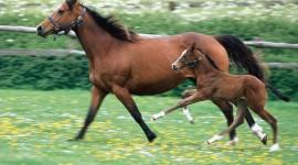 Horses Best Wallpaper