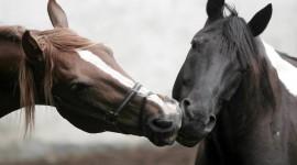 Horses Desktop Wallpaper HD