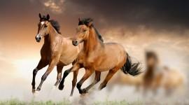 Horses Wallpaper For Desktop